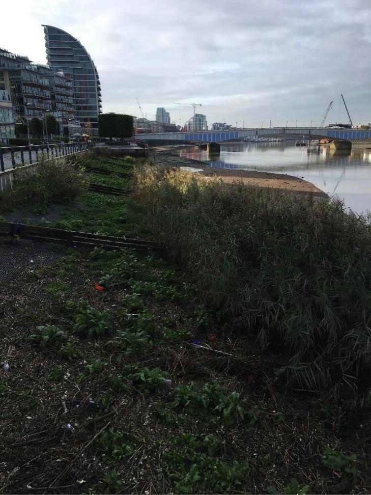 Battersea Reach- Looking upstream in Autumn 2017