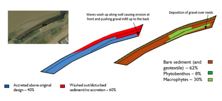 Schematic showing geomorphology and basic ecology.